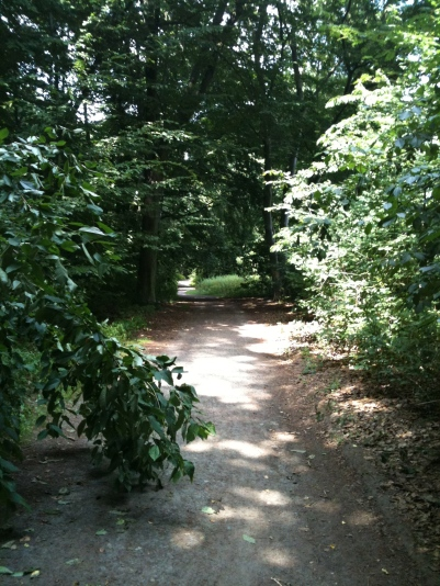 path to mindfullness