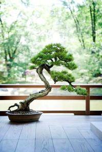 to bonsai or not to bonsai